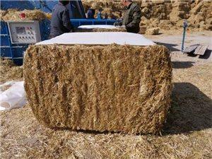 麦草批发 麦草出售 牧草颗粒加工销售