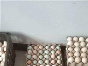 正宗农家土鸡蛋批发零售