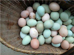 大悟新城金嶺農家土雞/土鴨/綠殼雞蛋/鴨蛋對外出售