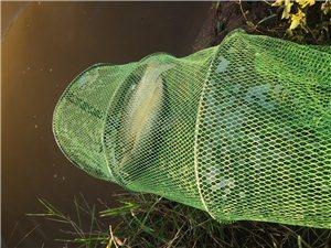 生态养殖鱼塘对外放钓