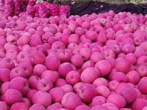 水果批发果园直销