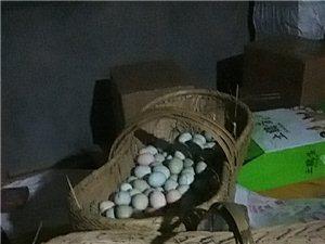 土鸡蛋绿壳蛋