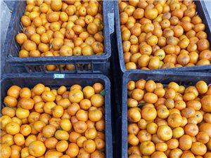 南丰蜜桔2元一斤,纯天然的,多买从优