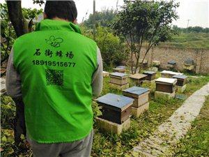 出售纯天然蜂蜜和蜂子