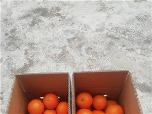 诚招脐橙代理商