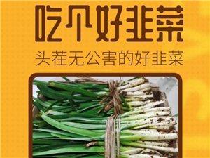 出售头刀有机韭菜