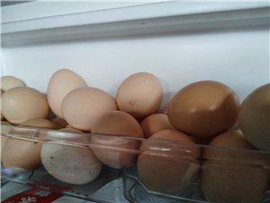 散養鵝,雞,鵝蛋,雞蛋,