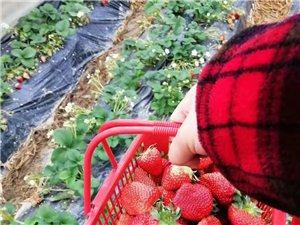 卖自家草莓