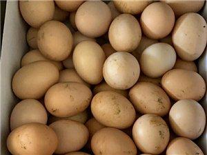 正宗散养土鸡蛋