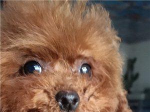 出售家养宠物狗,批发狗粮