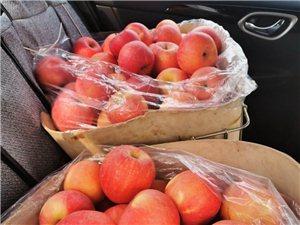出售大量冷庫紅富士蘋果