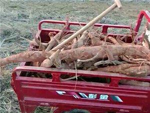 家乡特产农产品配送