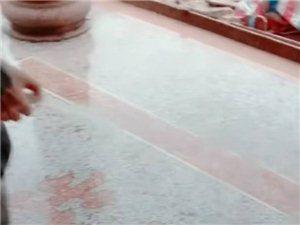 专业承接水磨石地板