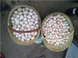出售土鸡蛋,鸭蛋