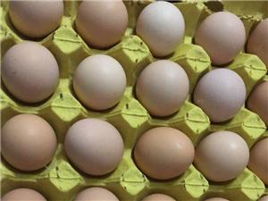 養殖場直銷農五土雞蛋