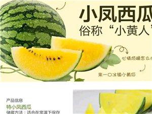 特小鳳西瓜、黃壤、皮薄、汁多