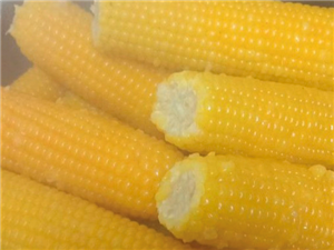 批发黏玉米60元元1箱60穗