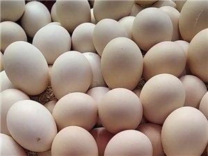 鸡场直供新鲜禽蛋,皮蛋