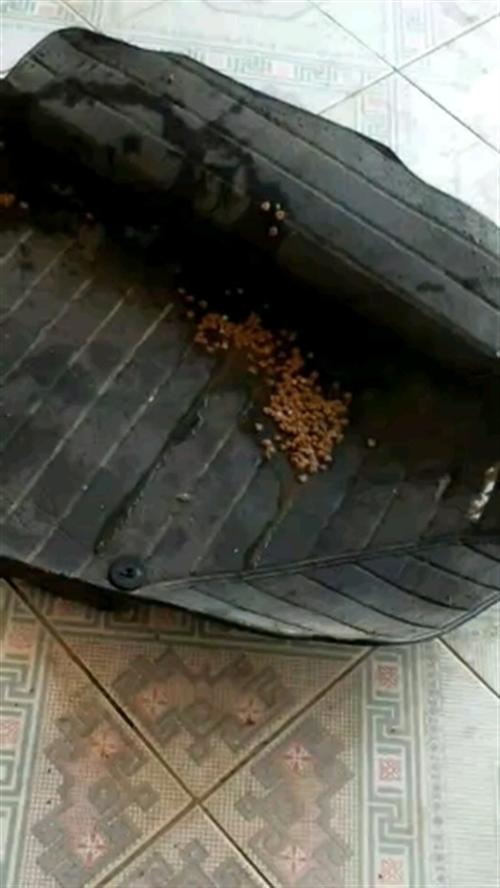 谁知道流浪狗猫吃了什么药物,请勿买狗肉猫肉