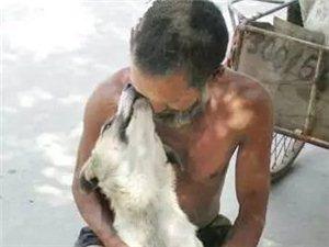 狗狗不嫌��家�...你不�x��,它必相依