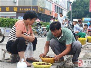 山东滨州夏季金蝉市场火爆