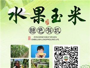 在桐城竟然发现可以生吃的玉米!