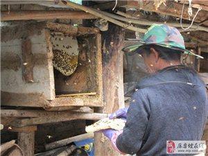 不走出认识蜂蜜的误区,您休想喝到好蜂蜜!