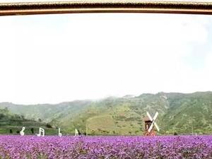盛夏的庞泉沟百花争艳,宛若风景画!