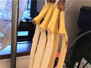 回来发现家里的一大串香蕉都自杀身亡了!