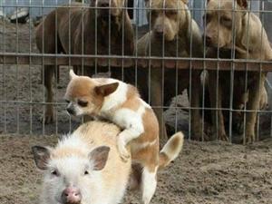 很解渴的动物搞笑图片,有望梅止渴的功效