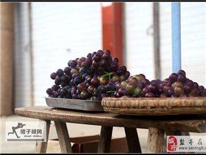 【傻子视角】葡萄熟了