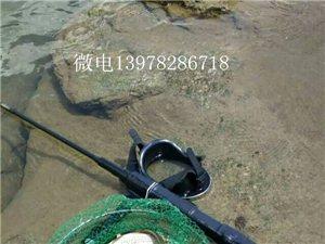 天热潜水电鱼枪的收获
