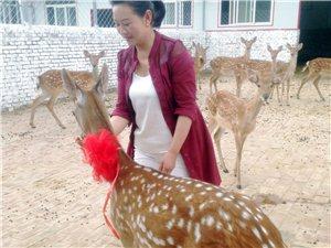 张家川有一个梅花鹿的王国,国王的一家好幸福。