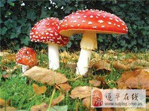 澳门金沙网址站县槐树乡池庄村一女子误食毒蘑菇而中毒