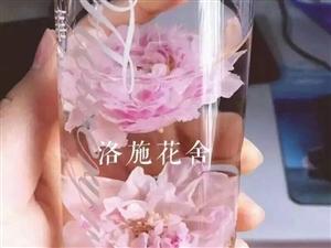 八月的玫瑰花