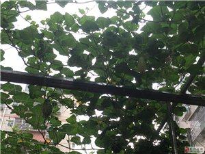 """龙川有一所幼儿园内有个""""小蔬菜园""""??"""