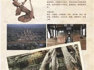 东南亚野生原木系列