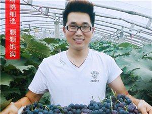 大学生创业~免费品尝有机葡萄