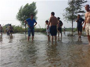 滹沱河看水(手机拍照)