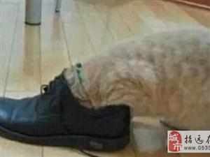 """�咪把�^伸�M主人的鞋里�了一下,1分�后�咪""""出��""""了"""