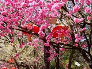 秋天里回看春暖花开,你会是怎样的心境?