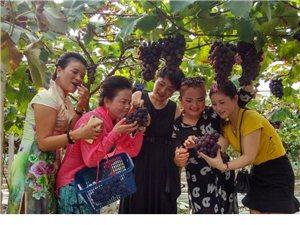 松桃太平营乡白果村~如阿雅葡萄熟了,你在来的路上了吗?