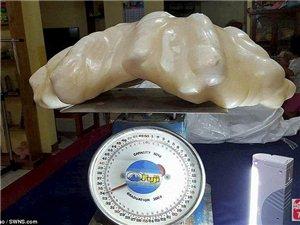 世界最大珍珠价值一亿美金 竟被渔民雪藏十年