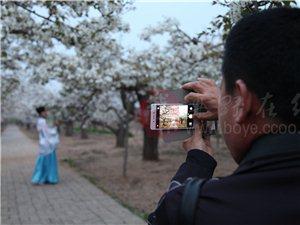 2016年梨花节摄影比赛获奖作品统统在这里
