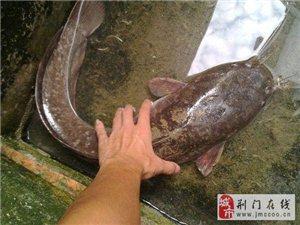 有些人说这鱼不能吃,我就不信了!