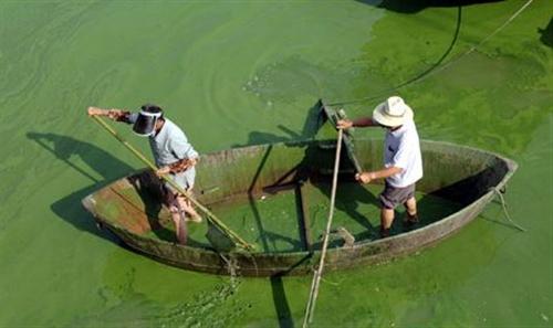 """巢湖是中华大地上一颗璀璨""""明珠""""该如何走出蓝藻困局"""