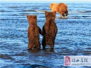 两只小熊手拉手等妈妈捕鱼归来
