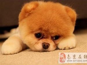 宠物辣么萌,爱护狗狗