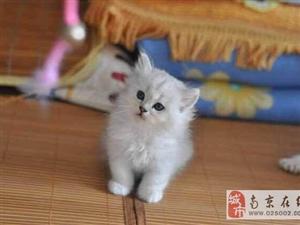 猫猫温顺又萌