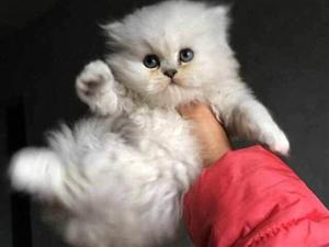 带猫咪一起愉快的玩耍